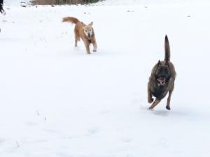 Buli i Cendra nevada