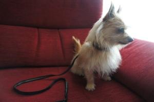 En Tuby està molt elegant!