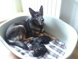 Els cadellets recent nascuts