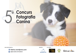 5è concurs fotografia by lladruc