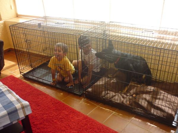 La Muga i els meus nebots jugant a dins una gàbia plegable que, com veieu, és multifunció! :)