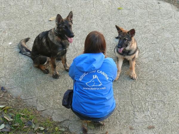 La Mina (esquerra) i la Burka (dreta) provenen de dos bons criadors però recordeu que a les protectores i gosseres podeu trobar gossos fantàstics. No compreu a multricriadors, si us plau!