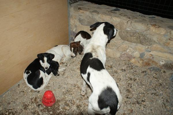 Farem tots els possibles per trobar una bona llar a aquesta magnífica família canina!