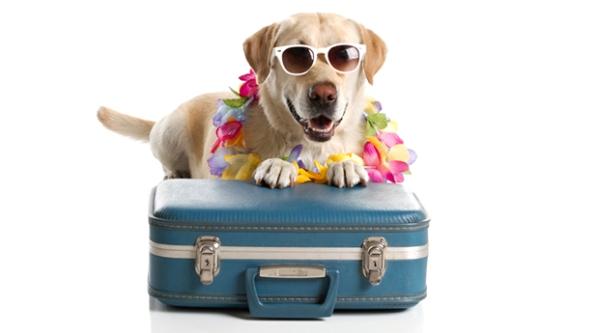 Marxarem de vacances!