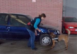 La Cendra fent un recerca de vehicles durant el curs