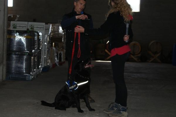 La Trufa, gossa detectora de drogues, ben atenta a la seva mestressa Judit!