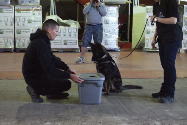 La Mina, gossa detectora d'explosius, millorant la marcació de la substància