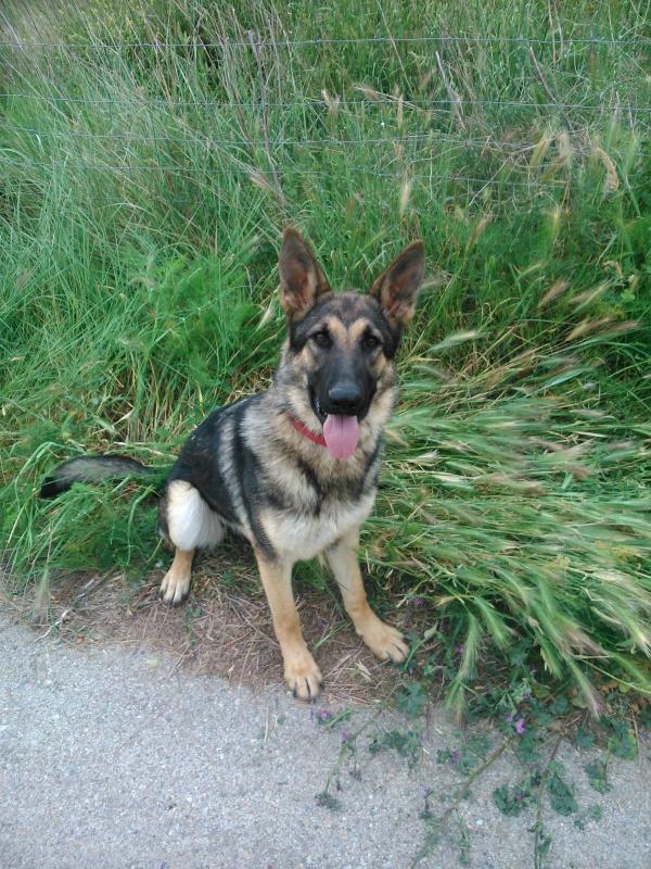 La Burka, gossa detectora d'explosius de Lladruc, sempre es posa on no s'ha de posar! :)