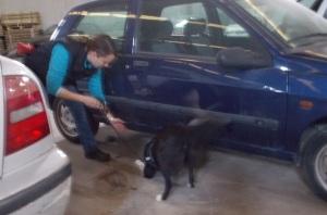 La Syra fent una recerca als baixos d'un vehicle