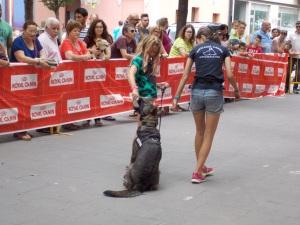 La Mina amb una voluntària del públic de 10 anys. Com veieu els gossos detectors de Lladruc tenen un excel·lent control de la mossegada!