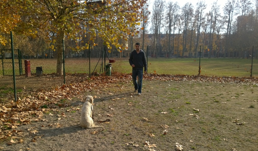 I en Trufo, futur gos detector de trufes de l'Alfons!