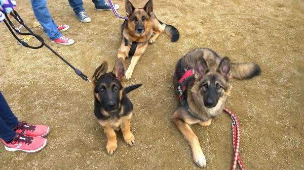 La secció germànico-belga del curs: l'Iggy, la Leela i la Tuca