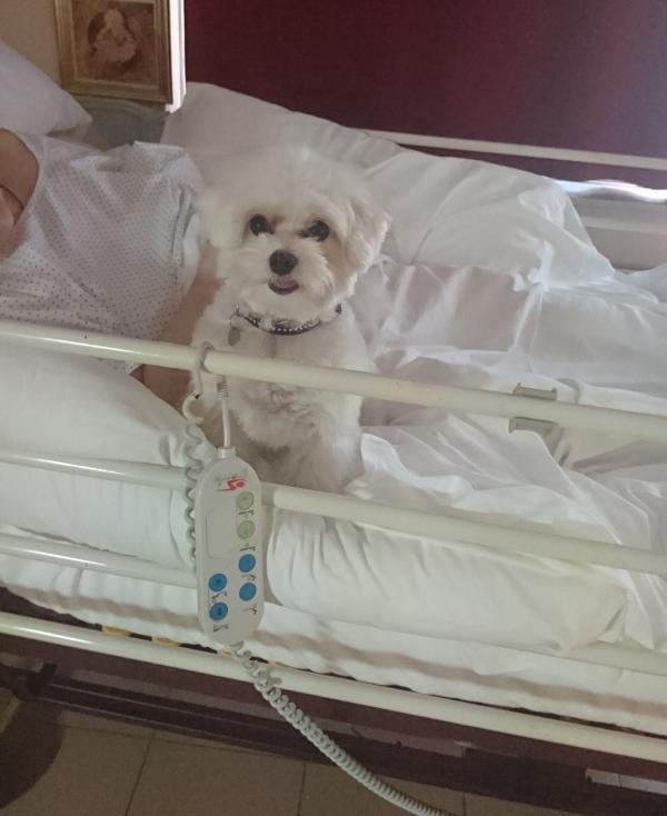 La Umi durant una sessió de teràpia assistida amb gossos a la residència Creu de Palau